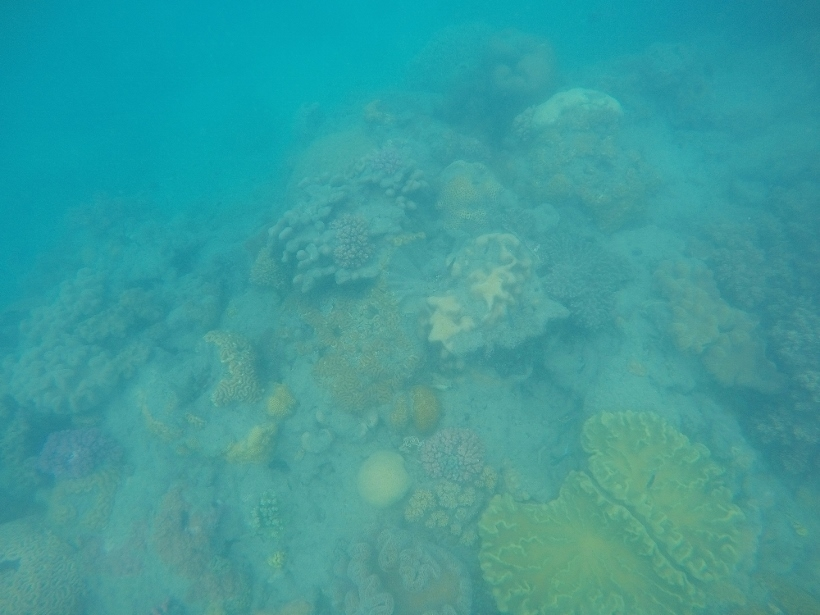 whitsundays reef