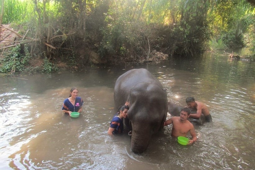 Bathing elephants in Chiang Mai