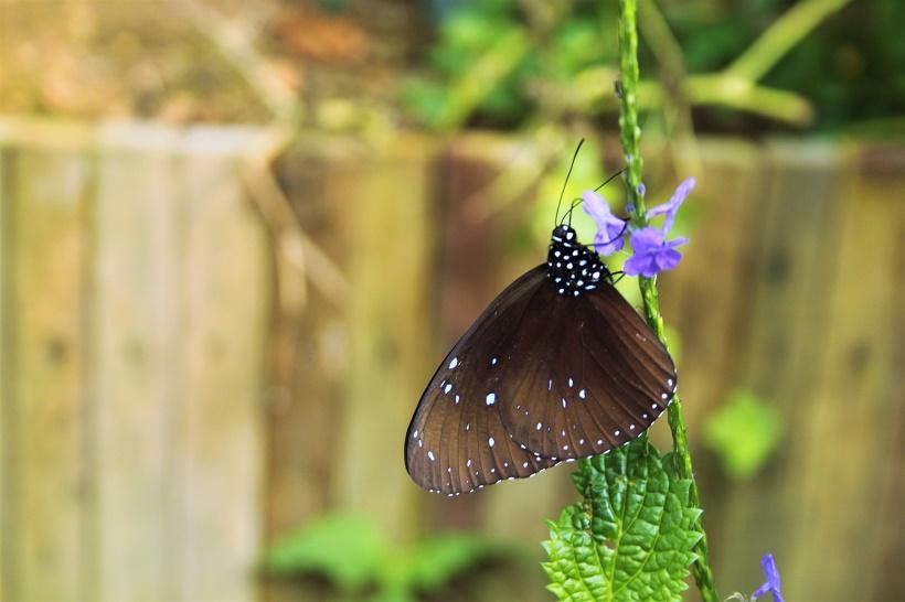 Butterfly Farm Cameron Highlands