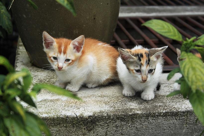 Kittens Malaysia