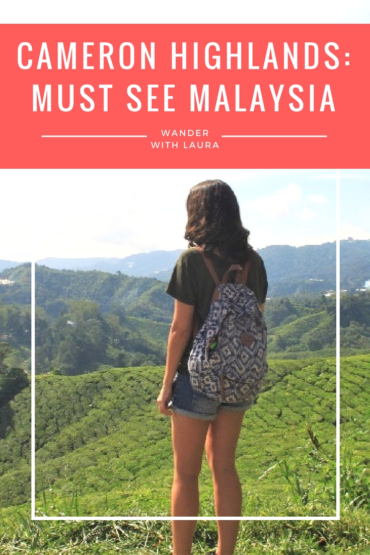 Why everyone should visit the Cameron Highlands