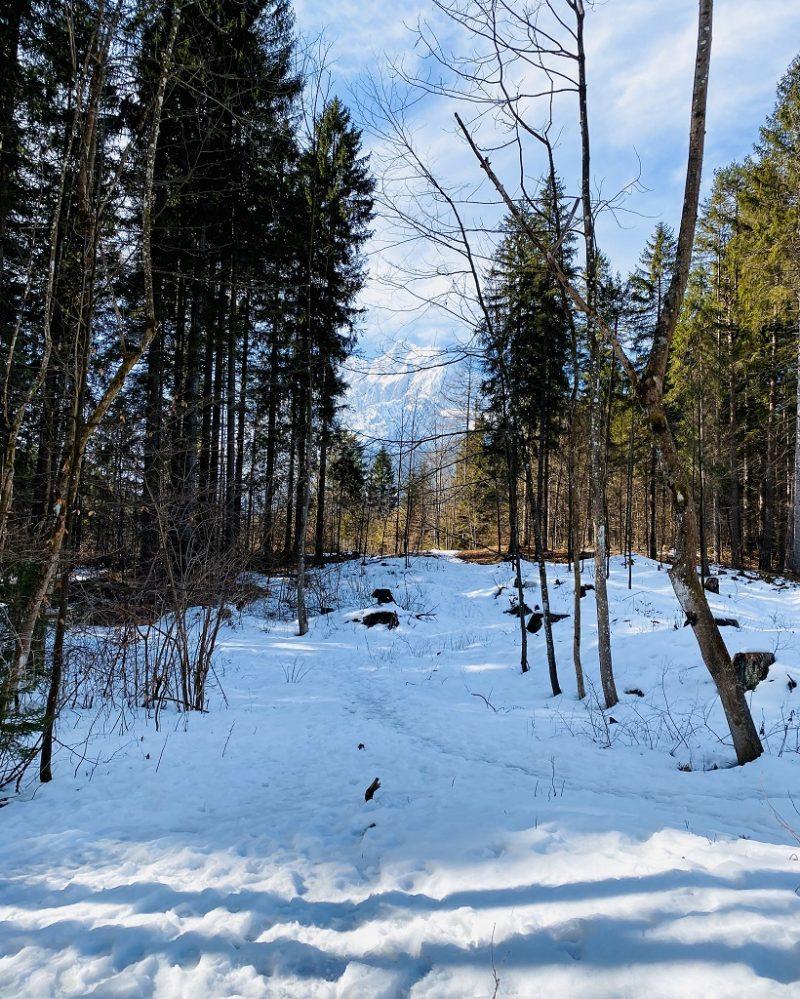 Snow in Lake Zelenci woods