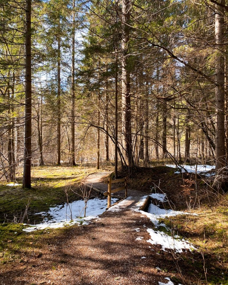 Woods at Lake Zelenci